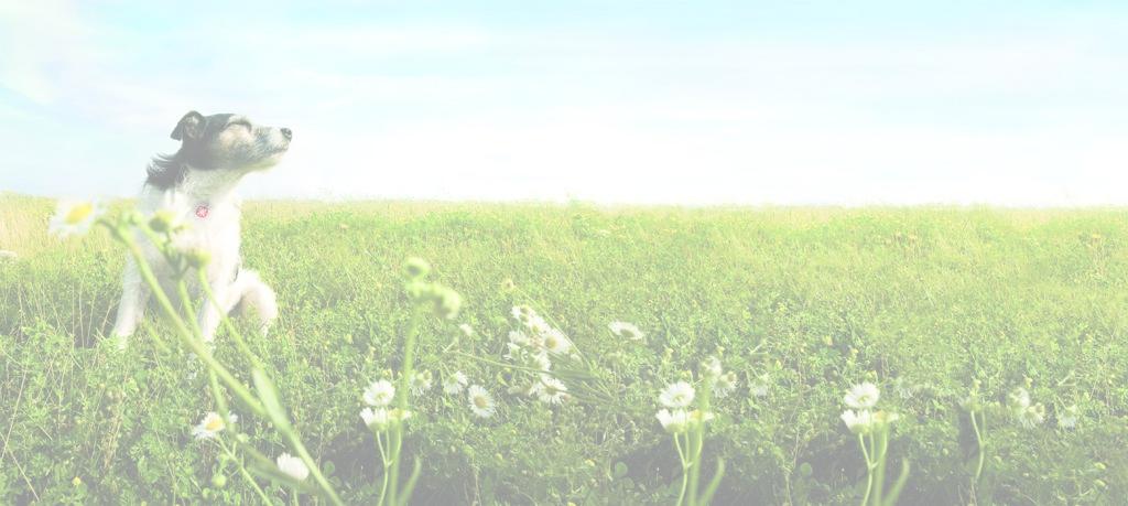 Un perro en una pradera